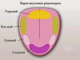 Схема рецепторов языка