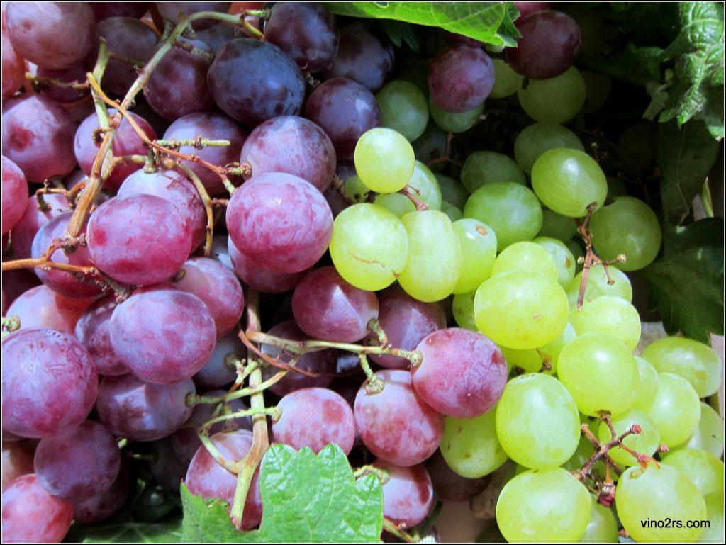 две виноградные грозди