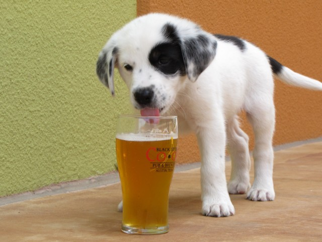 dog's beer