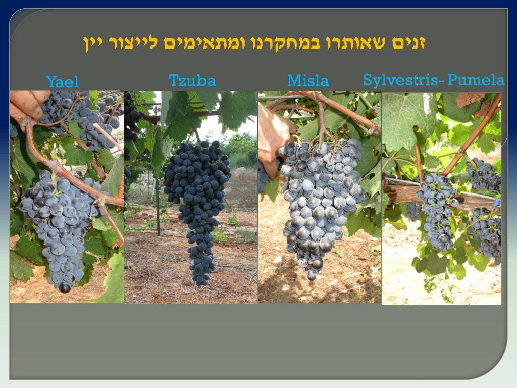 вино Израиля, Дрори 10