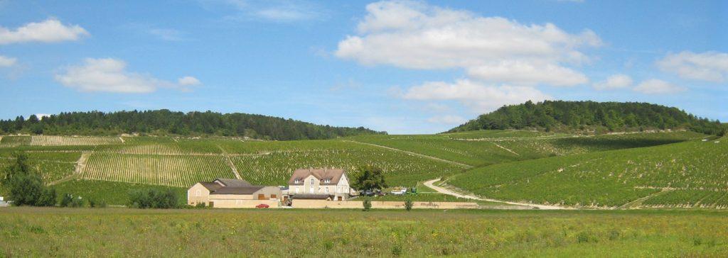 Grand Cru vineyards basking in the sun in Chablis - виноградники Гран Крю греются на солнце в Шабли. Фото с сайта https://www.jamessuckling.com